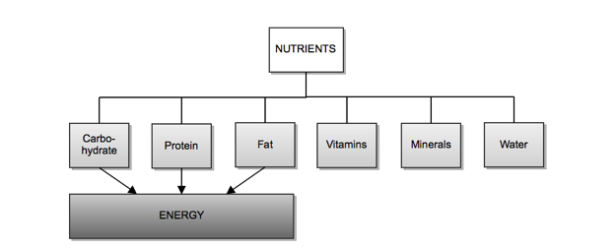 Nutrition 2.png